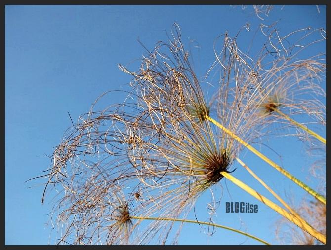 plant by BLOGitse