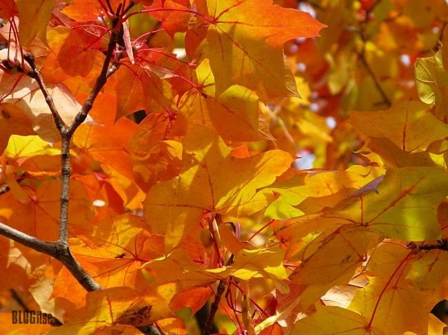 autumn leaves by BLOGitse