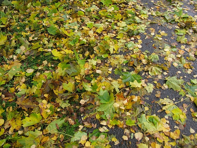 autumn green by BLOGitse