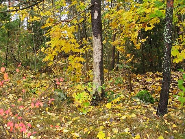 autumn woods by BLOGitse