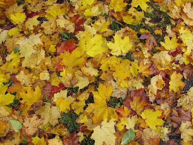 autumn yellow by BLOGitse