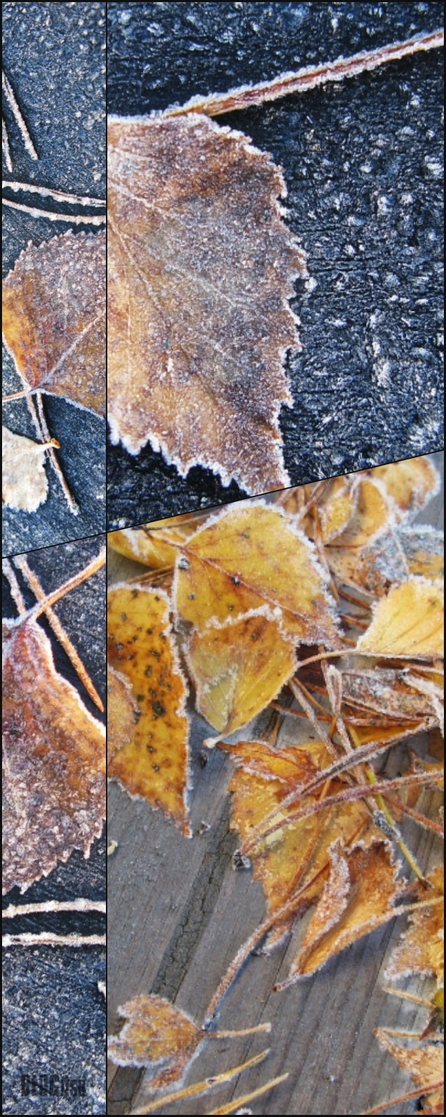 frosty autumn leaves collage by BLOGitse