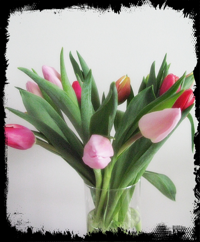 tulips by BLOGitse