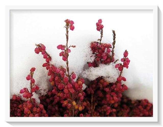weekend flowers by BLOGitse