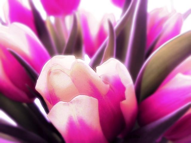 weekend tulips by BLOGitse