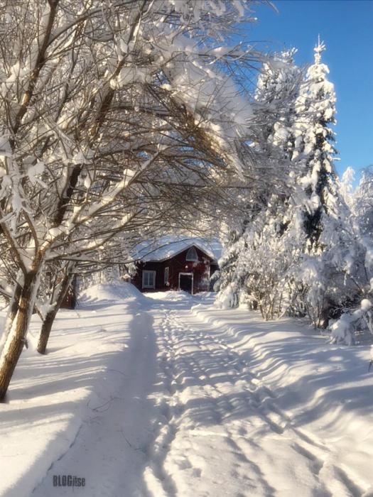 winter 2019 in Finland by BLOGitse