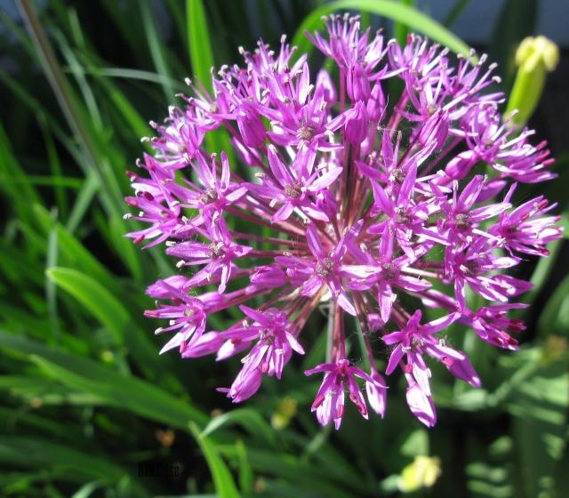 spring flower by BLOGitse