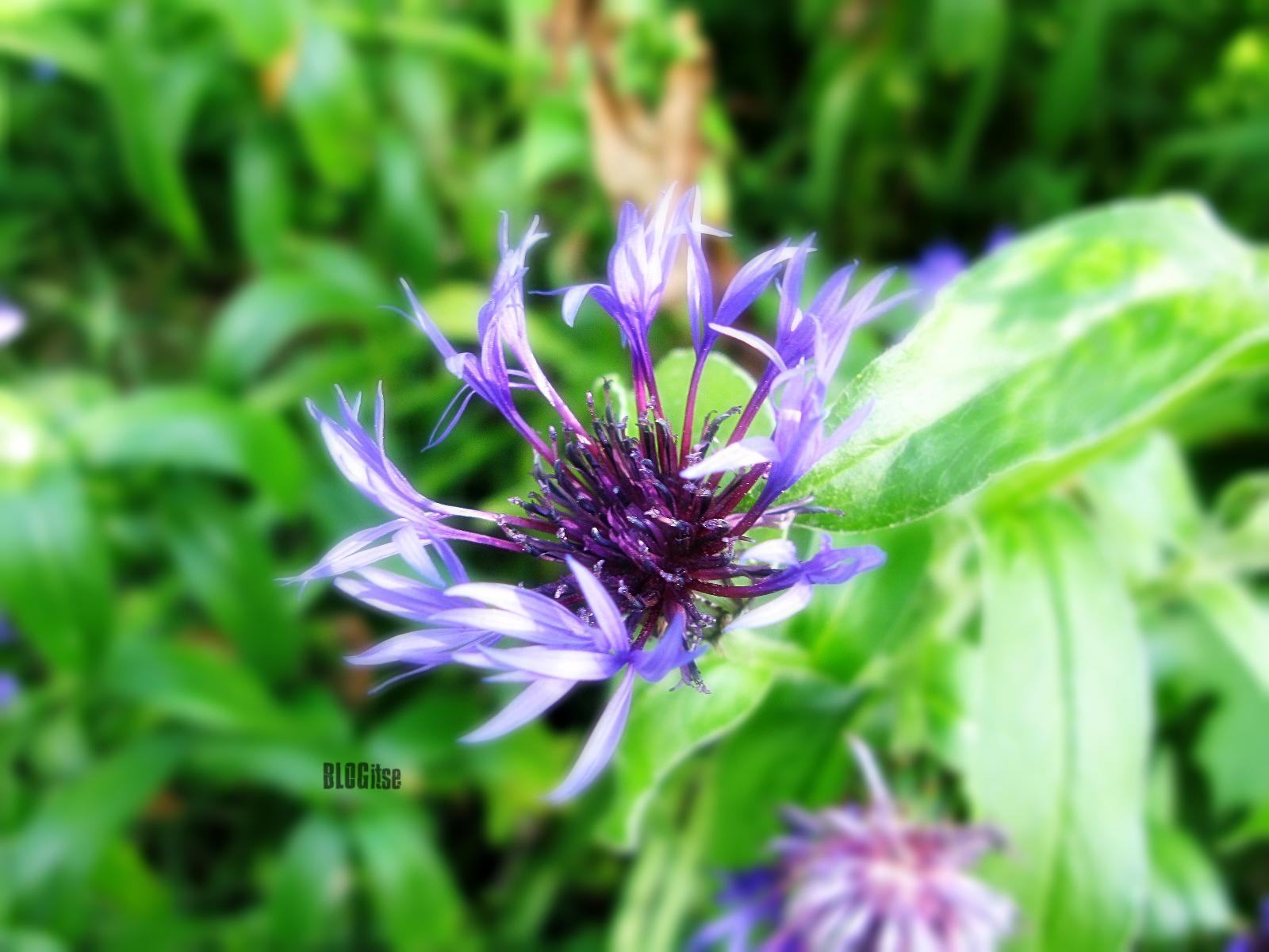 weekend flower by BLOGitse