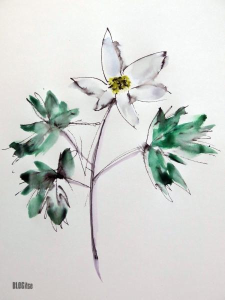 Anemone nemorosa by BLOGitse