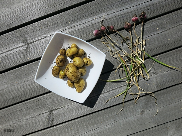 new potatoes and garlic by BLOGitse