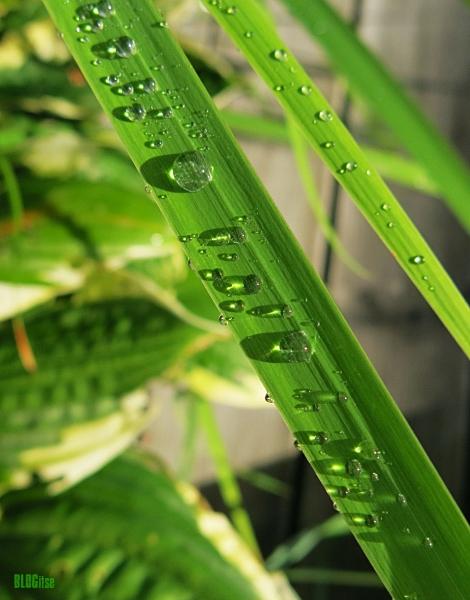 rain drops by BLOGitse
